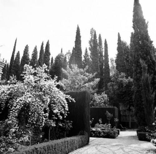 Korrekt afstand mellem italienske cypresser