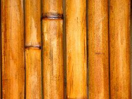 Hvorfor vælge bambus gulve?
