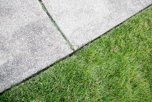 Sort græsplæne biller