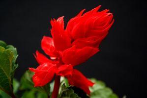 Blomster til høje vaser