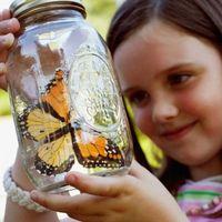 Hvordan til at fange en sommerfugl med dine hænder