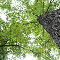 Liste over egetræer