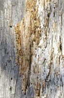 Stauder, termitter hader