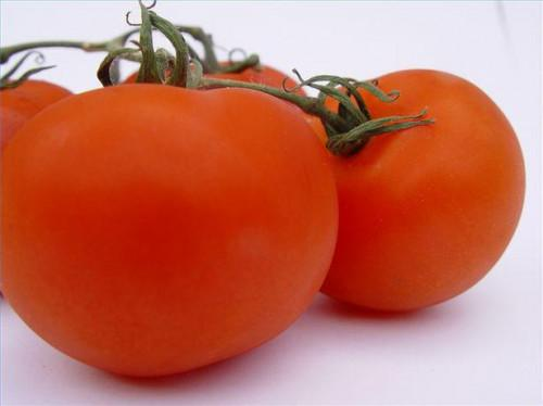 Hjemmelavet tomat gødning