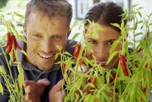Hvordan at vokse peber (Capsicum om året)