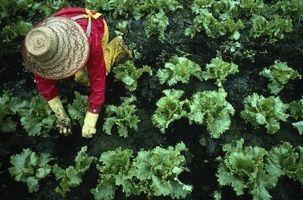 Hvordan man dyrker en køkkenhave med begrænset plads