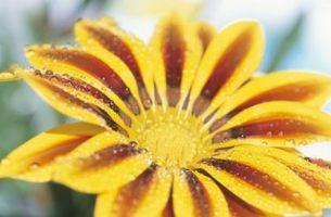 Er regnvand tilsætningsstoffer Safe til haven?